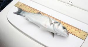 Mindstemålene på fisk