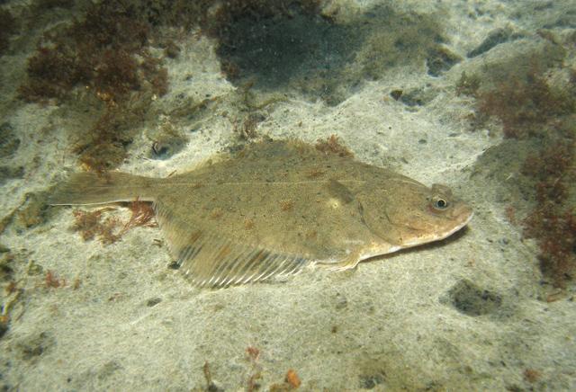 fisk grenå havn