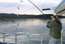Lystfisker fanger sild på forfang