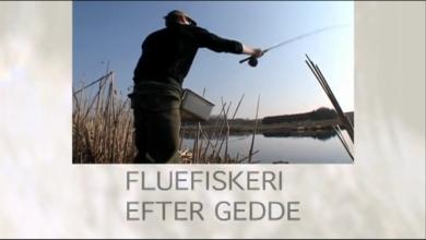 Fluefiskeri efter gedde