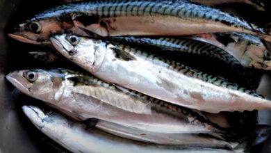 Makreller