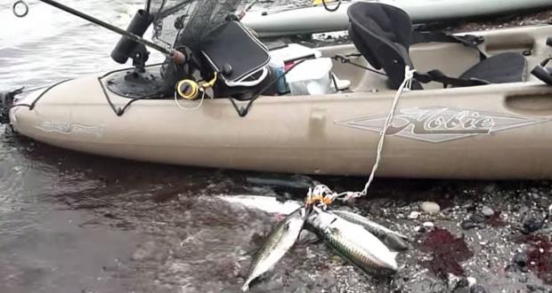 Kajak fiskeri